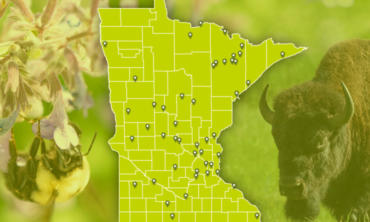Beneficiary Map Blog Preview MN Lottery