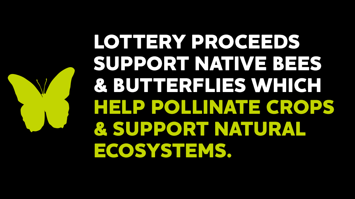 Lottery proceeds support native bees and butterflies which help pollinate crops and support natural ecosystems. Lottery proceeds provide funding to improve water and habitat quality and control invasive species. For every dollar spent on lottery tickets, approximately 25¢ goes to our great state. Lottery proceeds help create more recreation by funding state parks and trails.